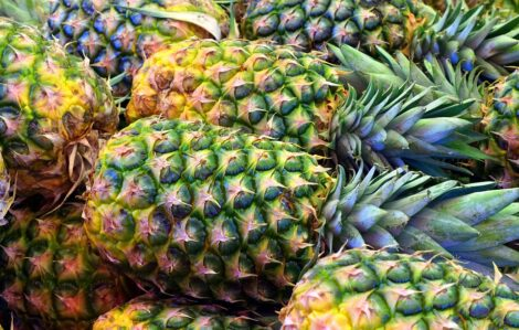 Ananas 1° Cat