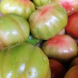 Pomodori pera verdi