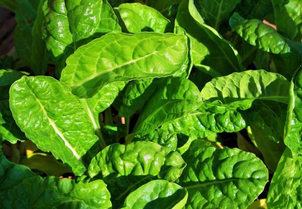 Gli spinaci rendono davvero più forti