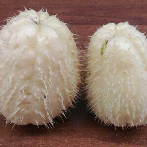 Zucchine spinose