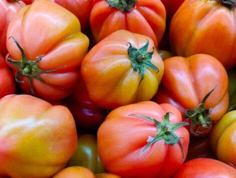 Pomodori cuore di bue II cat