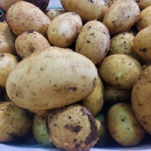patate novelle di avezzano