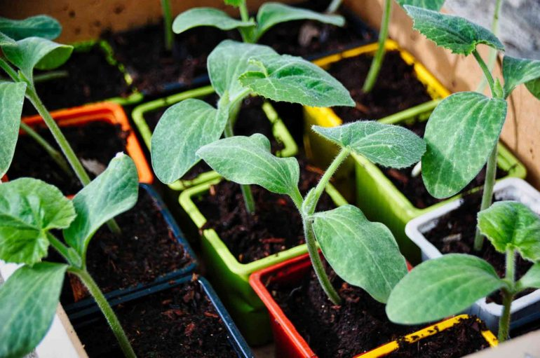 Come fare un orto in giardino da zero