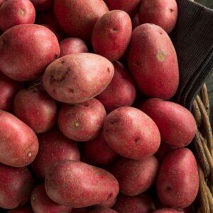 Patata rosse di avezzano
